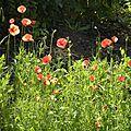 Quelques fleurs du jardin ......