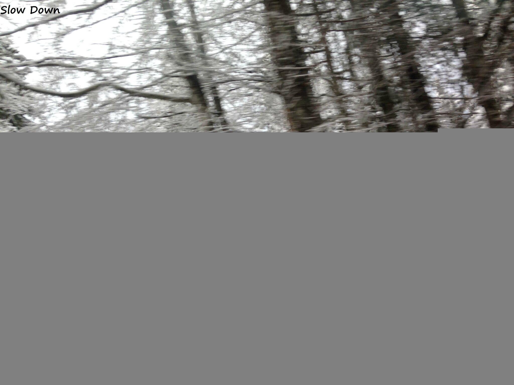Les branches enneigées