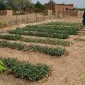 jardin noh