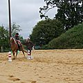 équitation d'extérieur - parcours en terrain varié (173)