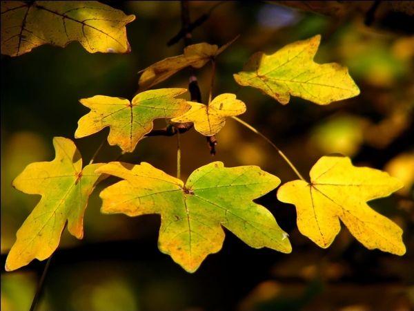 vent_d_automne