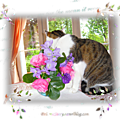 fleur parmi les fleurs (page 4)k
