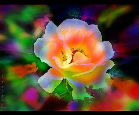 rose éclatante de FB_n