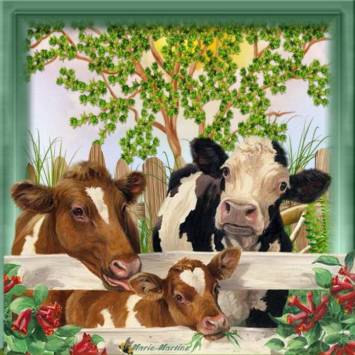 animaux vache