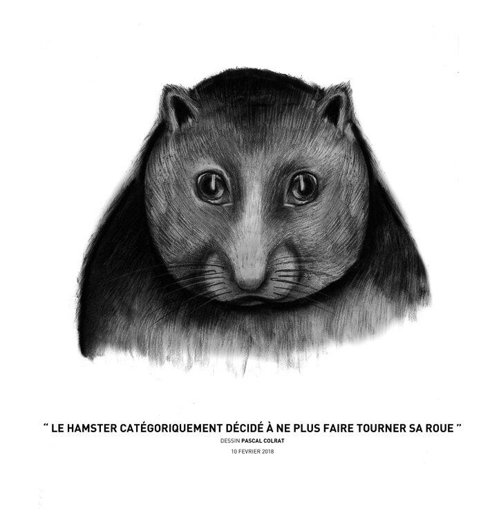 le_hamster_cate_goriquement_de_cide__a__ne_plus_faire_ourner_sa_roue
