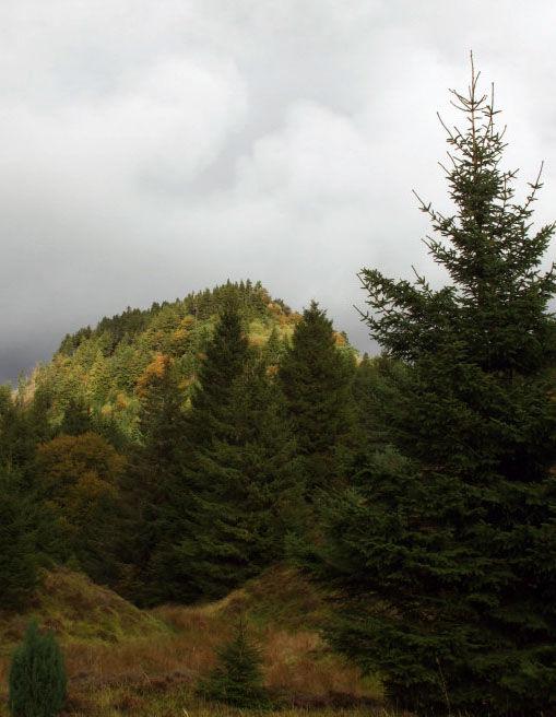 03 parc des volcans samedi 10 octobre