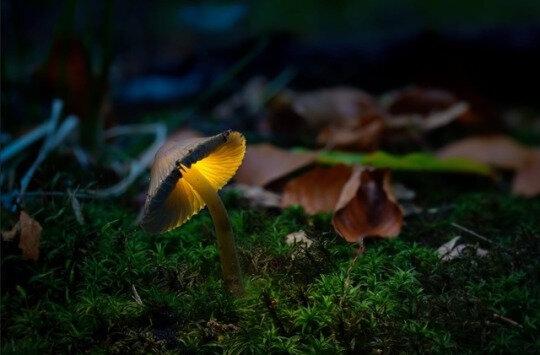 Magie et folklore : les champignons