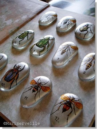 collection_entomologie