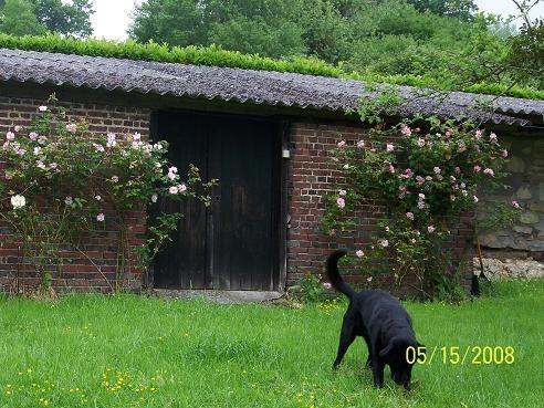 roses_jardin_015