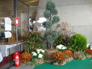 Parc_Expo_2010_bonsai