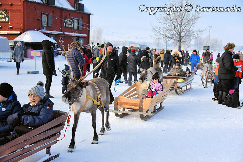reindeer_rides_for_families_oulu_-14