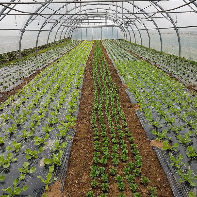 chez cathytutu amap legumes bio sframeli (16)