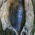 Coeur arbre_4252