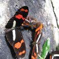 024 Papillons