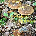 Neoboletus erythropus