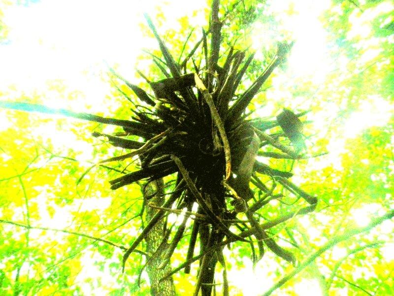 étoile d'écorces yurtao