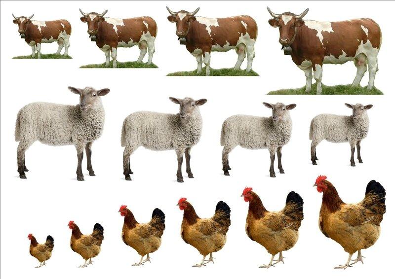 images vaches moutons poules