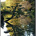 Derniers reflets d'automne au parc oriental (2/2)