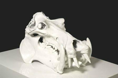 crâne d'hippopotame de 2009 pasqua