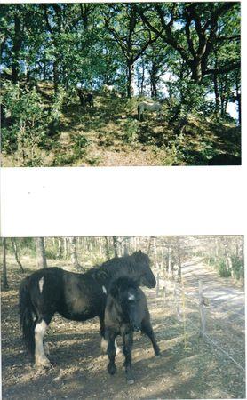 poney 6