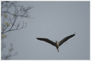 heron_transport_branche_face_050408