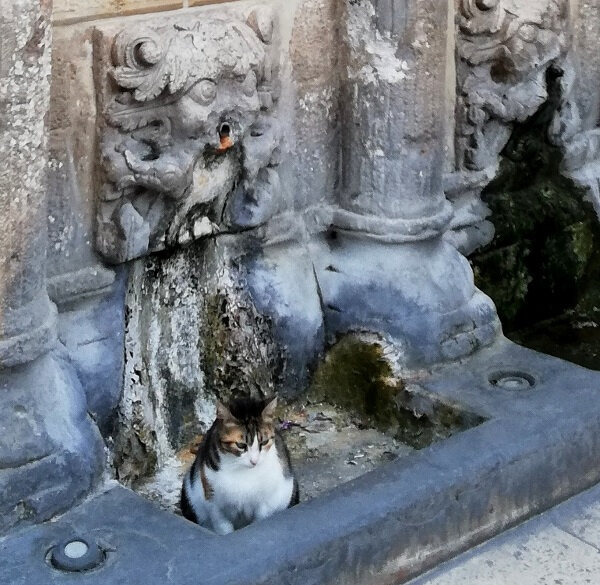 crete chat Rethymnon fontaine Rimondi