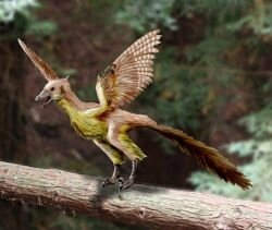 Archaeopteryx2_NT