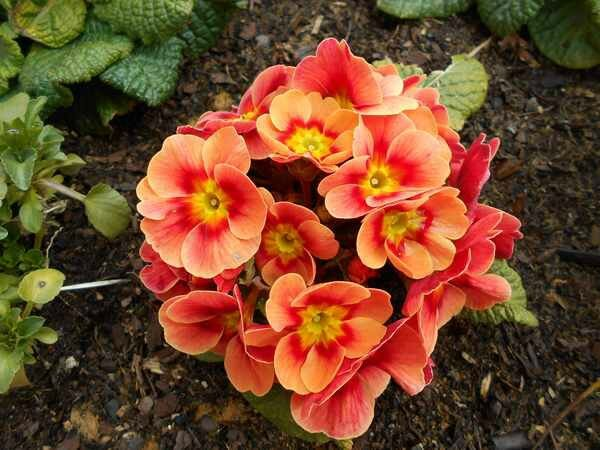 fleur161