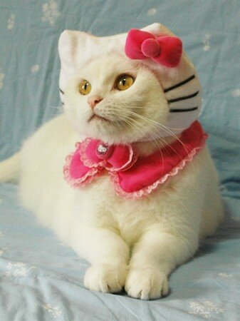 hello_kitty_cat_2