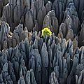 Madagascar, une île de beauté