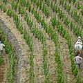 18 mars 2015 - journée techique vigne à bourg-les-valence (drôme)