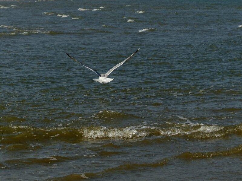 31 aout 2016 la mer (24)
