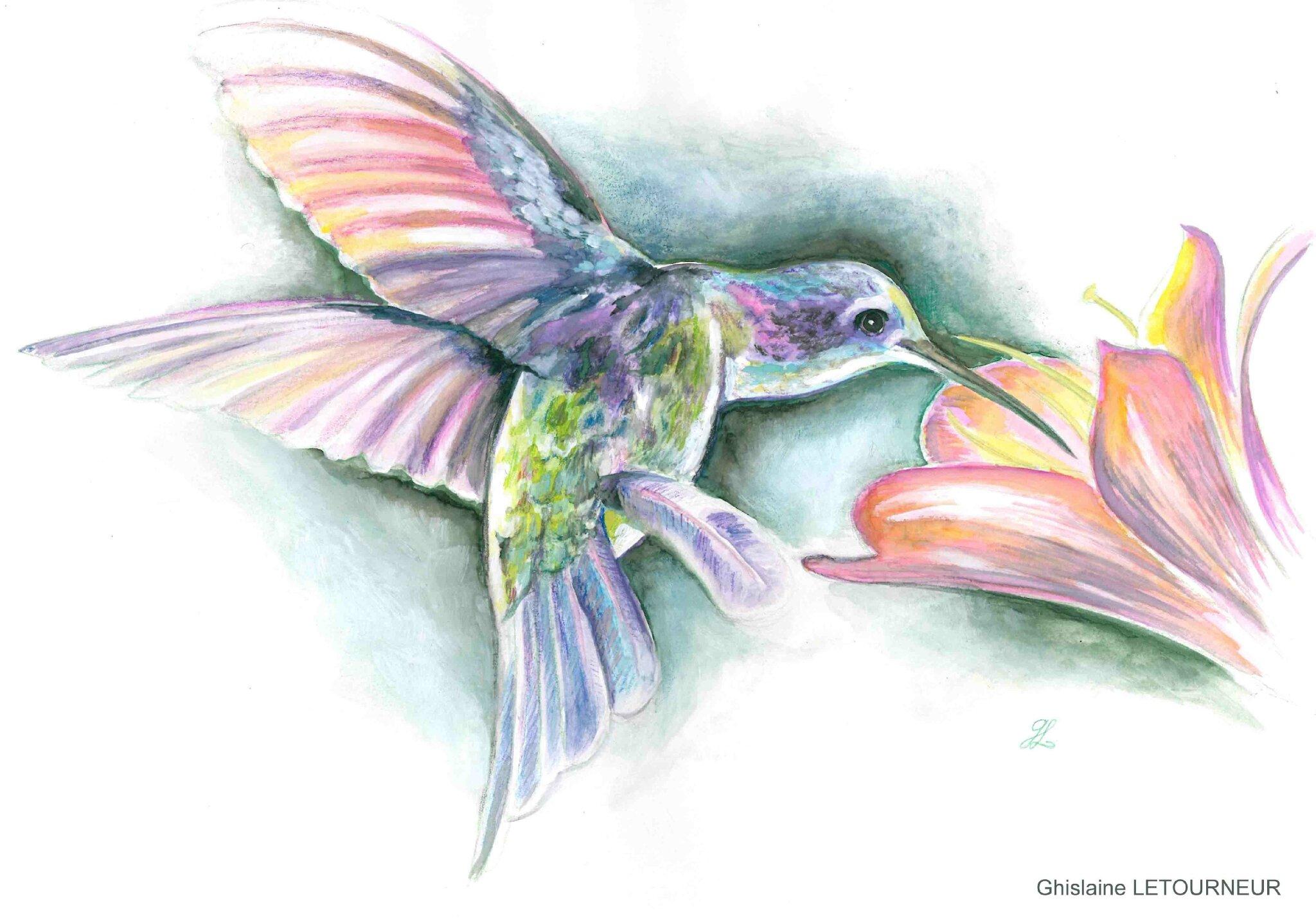 Colibri peinture gouache Ghislaine Letourneur