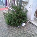 Mon beau sapin Grande Rue Noël 2013