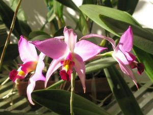 blog_orchid10