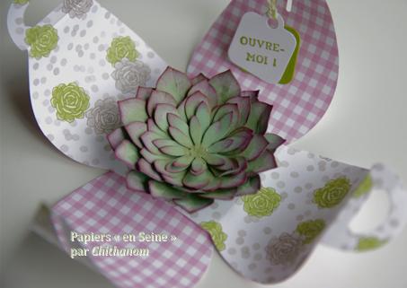 Succulents_boi_te_2