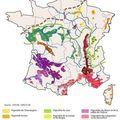 Les grandes régions viticoles françaises