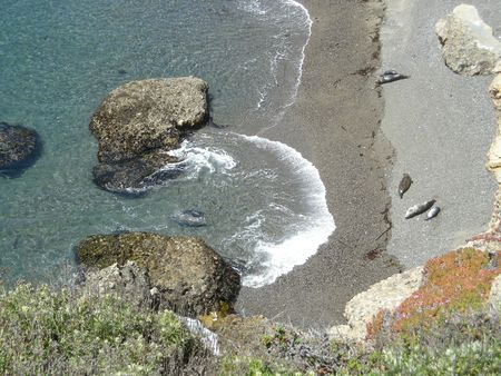 sealion cove5