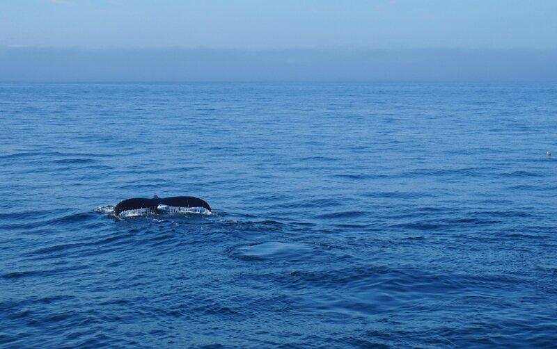 WhaleWatch (4)