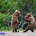 Funny-Animals-funny-animals-fun-animals-bears-pics-3_large