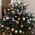 sapin rose6
