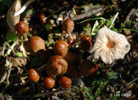 champignons02