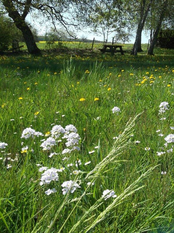 Paysage des champs fleuris