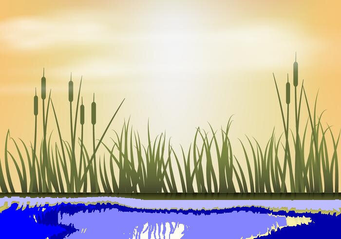 reeds-on-sunset-background-vector