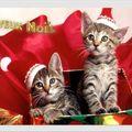 Noël et les animaux