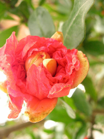 fleur_en_papier_crepon