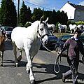Concours élevage local - bernaville 2013