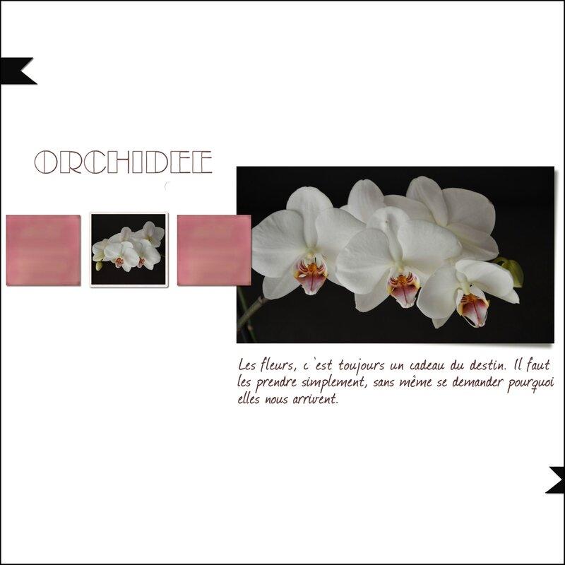 Mireille_orchidée
