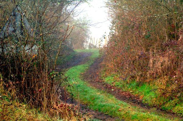 chemin argile et brume hiver