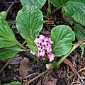 Fleurs du 1er janvier